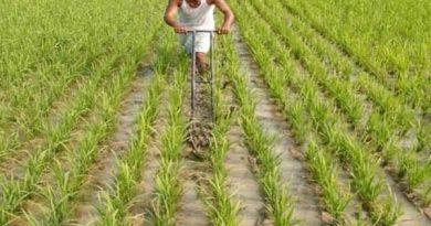 तेजी से बढ़ रहा कृषि क्षेत्र
